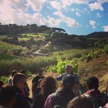 Barcelona Wijn Tour Alta Alella 2