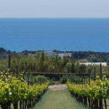 Barcelona Wijn Tour Alta Alella