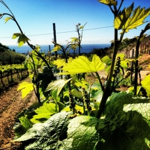 Barcelona Wijn Tour Alta Alella 3